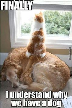 Cat puts sleeping dog to use. http://mbinge.co/1tv9ORN