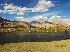 Nubra Valley, Leh (Ladakh India)