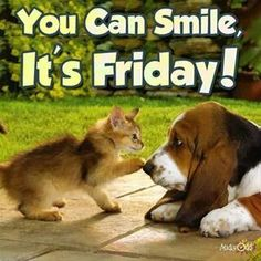 You can smile, it's Friday! friday friday quotes its friday friday images friday pics friday sayings friday image quotes Good Morning Friday, Friday Weekend, Good Morning Good Night, Good Morning Quotes, Happy Weekend, Friday Yay, Morning Pics, Friday Meme, Its Friday Quotes