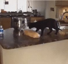 GIF I urgently need to steal this bread Funny Cat Videos, Funny Cats, Funny Animals, Cute Animals, Baby Pug Dog, Dog Cat, Cat Bread, Cats And Cucumbers, Kittens