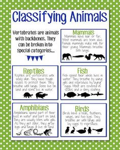 SC.3.L15.1 Classify animals into major groups (mammals, birds, reptiles, amphibians, fish, arthropods, vertebrates and invertebrates, those having live births and those which lay eggs) according to their physical characteristics and behaviors.   Classifying animal cards to use as a visaulization.