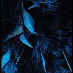 Blue feathers, plakat i gruppen Plakater / Fotokunst hos Desenio AB Gold Poster, Blue Poster, Poster Shop, Poster Prints, Art Posters, Azul Pantone, Desenio Posters, Azul Indigo, Everything Is Blue