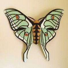 Spanish Moon Moth Sift Sculpture Graellsia by MollyBurgessDesigns