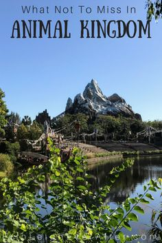Don't skip out on visiting Animal Kingdom during your Disney vacation! Here's what to do in Animal Kingdom plus everything you need to know about visiting Disney World as an adult.