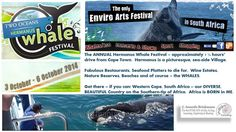 #HermanusWhaleFestival on this weekend. Beautiful coastal village, just outside #capetown. SO worth going. Enjoy!