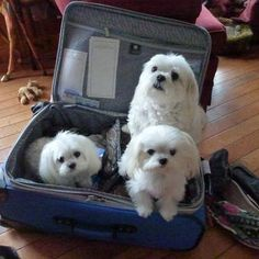 stowaways--i want to take mine everywhere with me, and most of the time, I do!