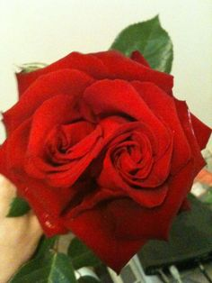 Double rose! - go to who I pinned this from and look at here Roses III....beautiful!!!