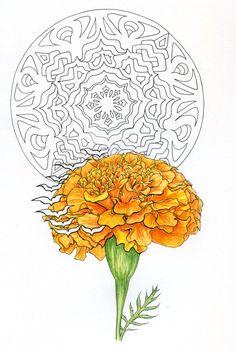 Marigold Nouveau, Progress, Here Comes The Gold! Upper Back Tattoos, Sketch Journal, Flower Art, Art Flowers, Linocut Prints, Illustration Art, Art Illustrations, Portrait Art, Sacred Geometry