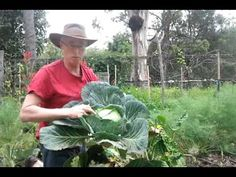 Biodynamic Gardening Organic Sauer Urban Agriculture Garden Seeds How To Grow Learn Cabbage Brisbane