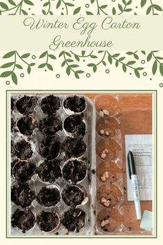 Have you ever wondered how to start your garden seeds with little effort? This winter egg carton greenhouse is effective and fun too! Greenhouse Kitchen, Lean To Greenhouse, Outdoor Greenhouse, Winter Greenhouse, Dome Greenhouse, Cheap Greenhouse, Greenhouse Plants, Outdoor Garden Decor, Greenhouse Ideas