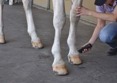Tips for clipping legs and faces!  http://www.proequinegrooms.com/index.php/tips/grooming/clipping-legs-and-faces/