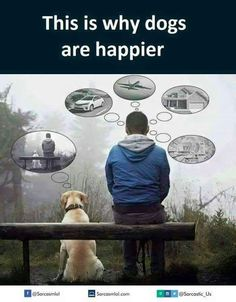 This Is Why Dogs Are Happier.