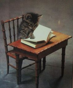 """""""I maybe a young kitten but this book really, really sucks!"""", Tibby mewed."""
