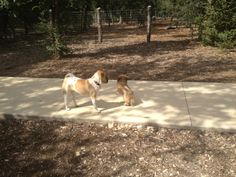 Phil Hardberger Park in San Antonio, TX Best Dog Park!  Has small and large dog areas.