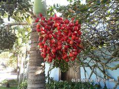Frutos de Brasil