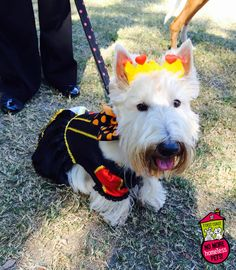 The Queen of Hearts | First Coast No More Homeless Pets | #dogtoberfest2014 #fcnmhp