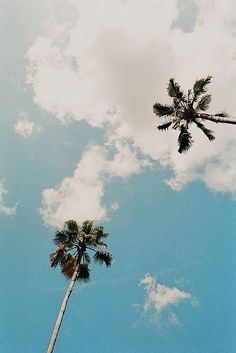 Staring up at the palm trees, summer vibes