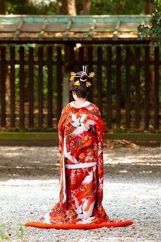 Japanese Shinto bride (Hayanome) : Meiji Jingu, Tokyo, Japan