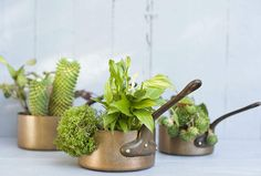 One small detail to consider when purchasing a metal flowerpot is the appearance and interior appearance and the design of the drainage hole. Succulents In Containers, Container Plants, Planting Succulents, Container Gardening, Succulent Plants, Container Flowers, Vegetable Gardening, Potted Plants, Succulent Ideas
