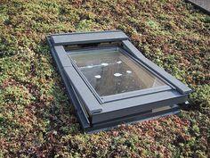 sedum roof & window   Flickr - Photo Sharing!