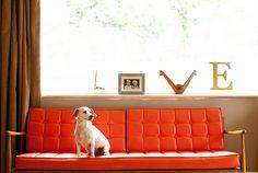 love, a window and dog