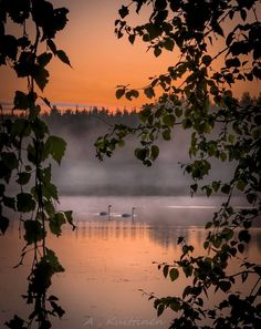 Swans in Finland Mother Earth, Mother Nature, Beautiful World, Beautiful Places, Amazing Nature, Belle Photo, Pretty Pictures, Beautiful Landscapes, Serenity