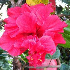 a quien anunciamos, amonestando a todo hombre, y enseñando a todo hombre en toda sabiduría, a fin de presentar perfecto en Cristo Jesús a todo hombre; Colosenses 1:28 ________________________________ #bynael #boricua #boricuas #frompuertorico #puertorriqueño  #puertorico #isladelencanto #island #boriquen #borinquén #tropical #flower #loveflowers #laborday #beautiful #flores #nature #lovephotography #lovejesus #lovegod #followjesustogether #followjesuschrist #cogop #colorful #picoftheday…