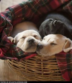 Sweet Sleeping Puppies - A Place to Love Dogs