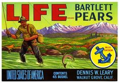 Label for LIFE brand pears from California Historical Society collection on Flickr Commons