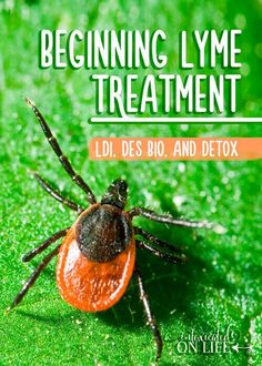 Beginning Lyme Treatment: LDI, Des Bio, and Detox The beginning of Lyme treatment. LDI, DES BIO, and Detox. Read on to learn more about this. Herbal Cure, Herbal Remedies, Health Remedies, Diarrhea Remedies, Natural Cold Remedies, Chronic Pain, Fibromyalgia, Chronic Illness, Lyme Disease
