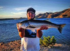 STRIPED BASS FISHING is on fire at Lake Mohave, and plenty of them in the class of this one, caught by local Bullhead City, Arizona angler Kenan Guleryuz, are being caught on anchovies and swimbaits.