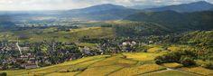 Sur la route des vins d'Alsace (c) Conseil Vins dAlsace