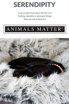 Animals Matter® Shag Puff® http://animalsmatter.com/products/animals-matter-shag-puff