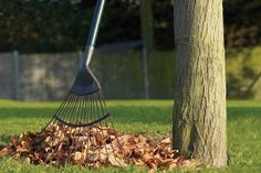 Get your lawn and garden priorities in order this fall.