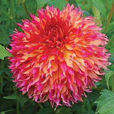10 Best New From Jung Seeds And Plants Images Flower Seeds