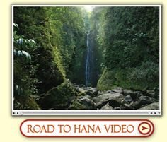 Road to Hana in Maui, Hawaii is a magnificent drive down a coastal highway with waterfalls and pools you can stop and jump in. Unmatched private & pristine beauty!