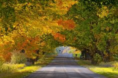 Here are a few spots in Michigan where you can view scenic fall foliage, pick apples at the local cider mill or grab a glass of award-winning wine.