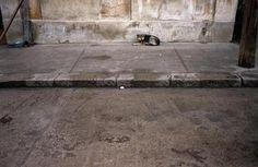 Bucarest (Roumanie) La loi, qui autorise l'euthanasie des chiens errants s'ils n'ont pas été réclamés dans un intervalle de 14 jours après leur capture, a été adoptée par 266 voix pour, 23 voix contre et 20 abstentions alors que plusieurs centaines de personnes manifestaient contre cette mesure en dehors du Parlement.  L'adoption du texte intervient une semaine après la mort d'un enfant mordu par des chiens près d'un parc de la capitale roumaine.
