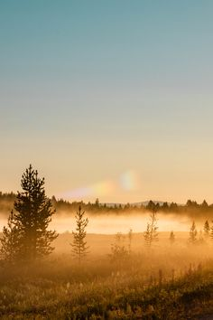 Midnight Sun in Swedish Lapland Sunrise Photography, People Photography, Wildlife Photography, Landscape Photography, Photography Ideas, Tiger Cubs, Tiger Tiger, Bengal Tiger, White Lions
