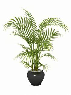 The top 15plants for removing indoor toxins according toNASA