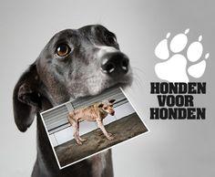 Helaas hebben veel honden in Europa nog steeds een hondenleven. Zwerfhonden worden massaal gedood, veel waakhonden worden mishandeld en 'rashonden' worden onder beroerde omstandigheden doorgefokt.  Wij vinden dat dit afgelopen moet zijn! Doe mee met onze campagne Honden voor Honden & deel dit bericht met andere hondenliefhebbers.