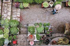 How We Created An Off-Grid Market Garden And Sustainable Business Organic Gardening, Gardening Tips, Nature Architecture, Dame Nature, Vietnam Voyage, Natural Pesticides, Pot Jardin, Market Garden, Veggie Gardens