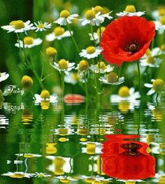 Lovely Water effect