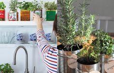 Pensando em fazer uma mini horta? Se você não souber por onde começar, fique de olho nesse pequeno guia e saiba como plantar temperos em casa.