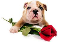 Is Your Pet Your Sweetheart?