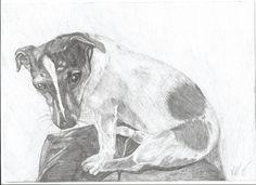 jack russel terier, kresba A4