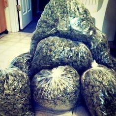 big bag of #weed