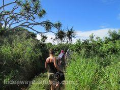 Hiking to Rock Garden, 'Eua