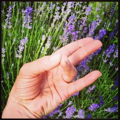 Fingeryoga, das sind Mudras mit den Händen, die man jederzeit zwischendurch machen kann. Auf dem Weg zum Kindergarten, beim Spazieren gehen, beim Anstehen in der Schlange beim Supermarkt oder beim …