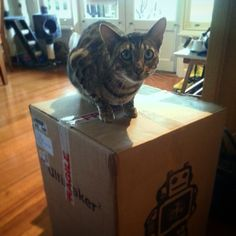 """Something we liked from Instagram! @bengalcatdexter can see the potential in the 3d printer """"Can this thing print salmon?"""" #bengalsofinstagram #bengalcatdexter #bengal #bengalcat  #catsofinstagram #catstagram #3dprinter #ultimaker #ultimaker2 #3dprinted #meowvswoof #meowbox #cat #cats  #hollywoodundead  There's a #jdog mask in the background. That counts right? by timclark27 check us out: http://bit.ly/1KyLetq"""
